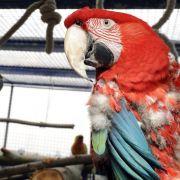 Stress und Langeweile: Warum Vögel Federn lassen (Foto)
