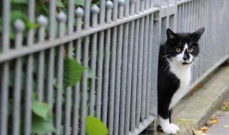 Keine Katzenjagd auf Vögel: ImGarten tiefe Zweige abschneiden (Foto)