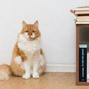 Der Speck muss weg: Hund und Katze auf Diät (Foto)