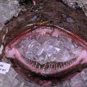 WWF besorgt um Fischbestände - Aal und Seeteufel tabu (Foto)