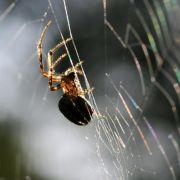 Achtung! Eklige Spinnen im Tank (Foto)