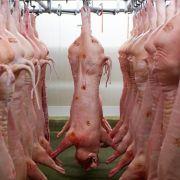 EU verklagt Russland im Schweinefleisch-Streit vor WTO (Foto)