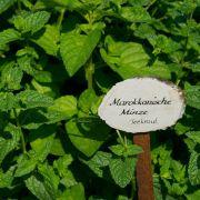 Bio-Pflanzen wachsen im Beet schneller an (Foto)