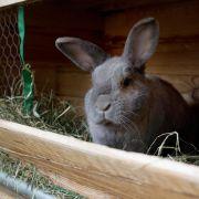 Kaninchen behalten im Käfig gerne den Überblick (Foto)