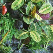 Der vertikale Garten - Wände mit Pflanzen schmücken (Foto)