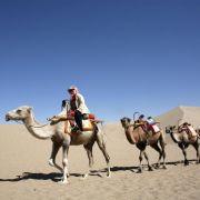 Kamele setzen weniger Methan frei als Kühe (Foto)