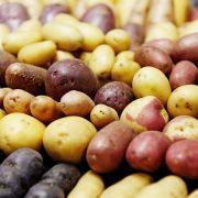 Anbaugebiet und Klima beeinflussen Kartoffel-Aroma (Foto)