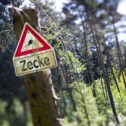 Zeckenbiss: Vor allem im Süden droht Infektionsgefahr (Foto)