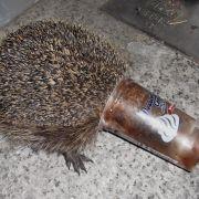 Igel bleibt in Puddingbecher hängen - Polizeieinsatz (Foto)