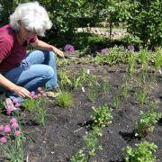 Unkrautzupfen und Co.: So schonen Gärtner ihren Rücken (Foto)