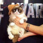 Darum ist Grumpy Cat dick im Geschäft (Foto)