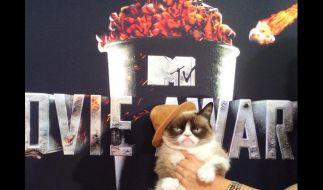 Die weltberühmte Katze Grumpy Cat (2) ist ein Internet-Star. bei den MTV-Movie Awards stahl sie den Promis dei Show. (Foto)