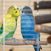 Vögel müssen auf Käfigstangen wippen können (Foto)