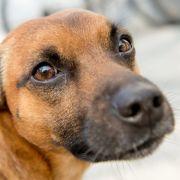 Des Menschen bester Freund kommt in China auf den Tisch. in Deutschland ist das Schlachten von Hunden und Katzen gesetzlich verboten.