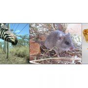 Rückgang der Artenvielfalt könnte Krankheitsrisiko erhöhen (Foto)