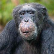 Tierschützer kämpfen gegen Patent auf Krebs-Gen (Foto)