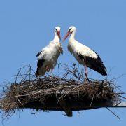 Mit dem Storch kommt der Frühling (Foto)