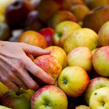 Frutarier - die radikalen Pflanzenschützer (Foto)
