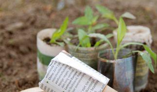 Aus Zeitungsschnipseln werden mit der Papiertopfpresse im Handumdrehen kleine Gefäße für Setzline. (Foto)