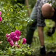Beim Gärtnern den Rücken schonen - so geht's (Foto)