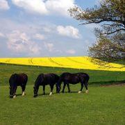 Leinsamen und Kräuter helfen Pferde beim Fellwechsel (Foto)