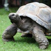 Als Riesenschildkröte Adwaitya um 1750 auf den Seychellen geboren wurde, spielte in Deutschland noch Friedrich der Große seine Flöte!