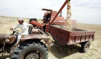 Ein Drittel der Anbaufläche profitiert von El Niños (Foto)