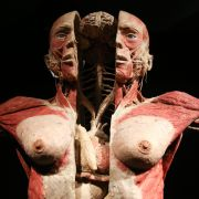Sie geht Menschen unter die Haut, und zwar im wahrsten Sinne des Wortes. Zu sehen sind aufgeschnittene Körper, innere Organe, Muskeln, Sehnen.