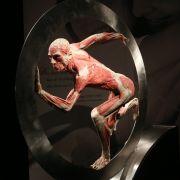 Leichenpräparator Gunther von Hagens zeigt die Leichen dabei in verschiedenen Situationen,...