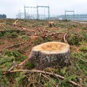 Jagdverband: Neue Stromtrassen für Tier- und Pflanzenschutz nutzen (Foto)