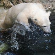 Bremerhavener Eisbärbaby auf den Namen Lale getauft (Foto)