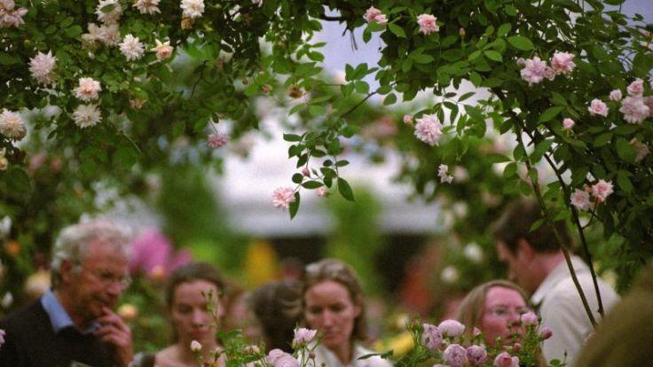 Wenn der Urlaub ruft: Blütenpracht und Weltrekorde (Foto)