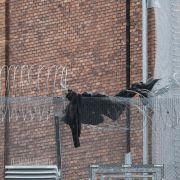 Mutmaßlicher Mörder des Promi-Wirts ist frei! (Foto)