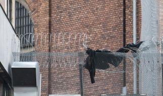 Ein schwarzes Kleidungsstück ließen die Ausbrecher auf dem Zaun der JVA zurück. (Foto)