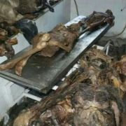Im Keller der Madrider Universität stapeln sich seit Jahren hunderte Leichen und modern vor sich hin. Angeblich ist die Wirtschaftskrise daran Schuld.
