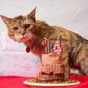 Mieze Poppy zur ältesten Katze der Welt gekürt (Foto)