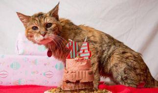 Mit 24 Jahren ist Poppy die «älteste lebende Katze» der Welt. (Foto)