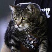 «Helden-Katze» Tara scheitert im Baseball (Foto)