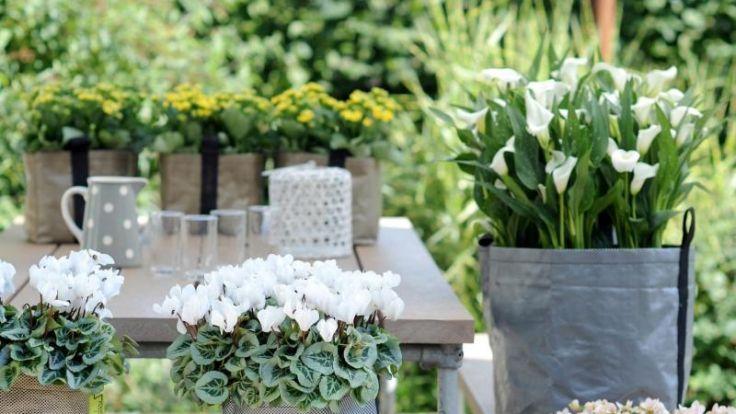 Sie überleben auch draußen- Zimmerpflanzen insFreie bringen (Foto)
