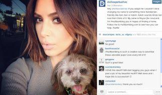 Kim Kardashian wird dank Muttbombing zur Hundevermittlerin. (Foto)