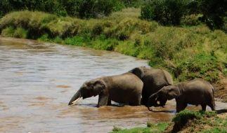 Die Elefanten retten ihr kleines Baby. (Foto)