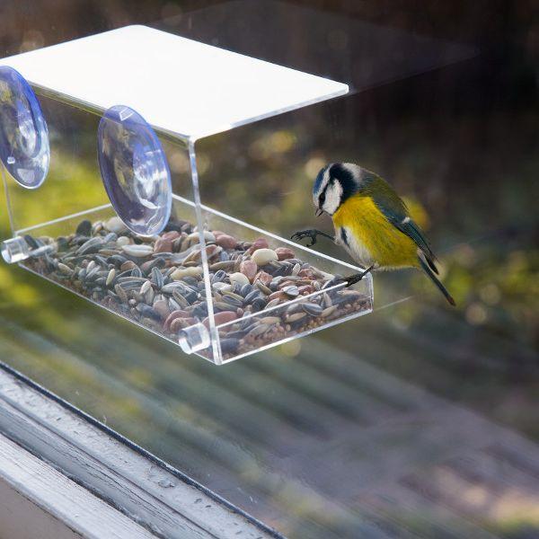 Hier kommen hungrige Vögel auf ihre Kosten (Foto)