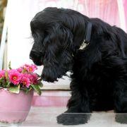 Urlaubsbetreuung von Haustieren steuerlich absetzbar (Foto)
