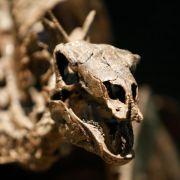 Geologen: Jura dauerte 5 Millionen Jahre länger (Foto)