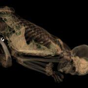 Mumien im CT-Scanner - British Museum geht neue Wege (Foto)