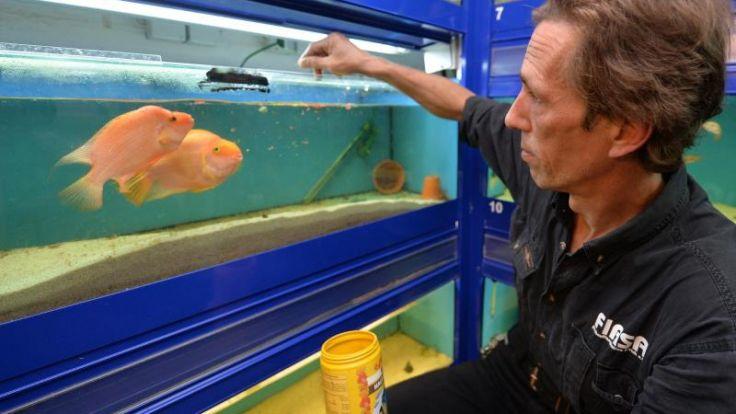 Im Fischasyl blubbert es im ganzen Haus (Foto)
