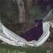 Dieser Schwarzbär weiß, wie man gepflegt chillt (Foto)