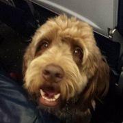 Notlandung nach Hundeschiss (Foto)