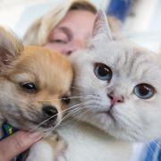 Katzenliebhaber sind klüger als Hundehalter (Foto)