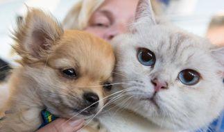 Hund oder Katze? Die Haustierwahl verrät so einiges über unseren Charakter. (Foto)